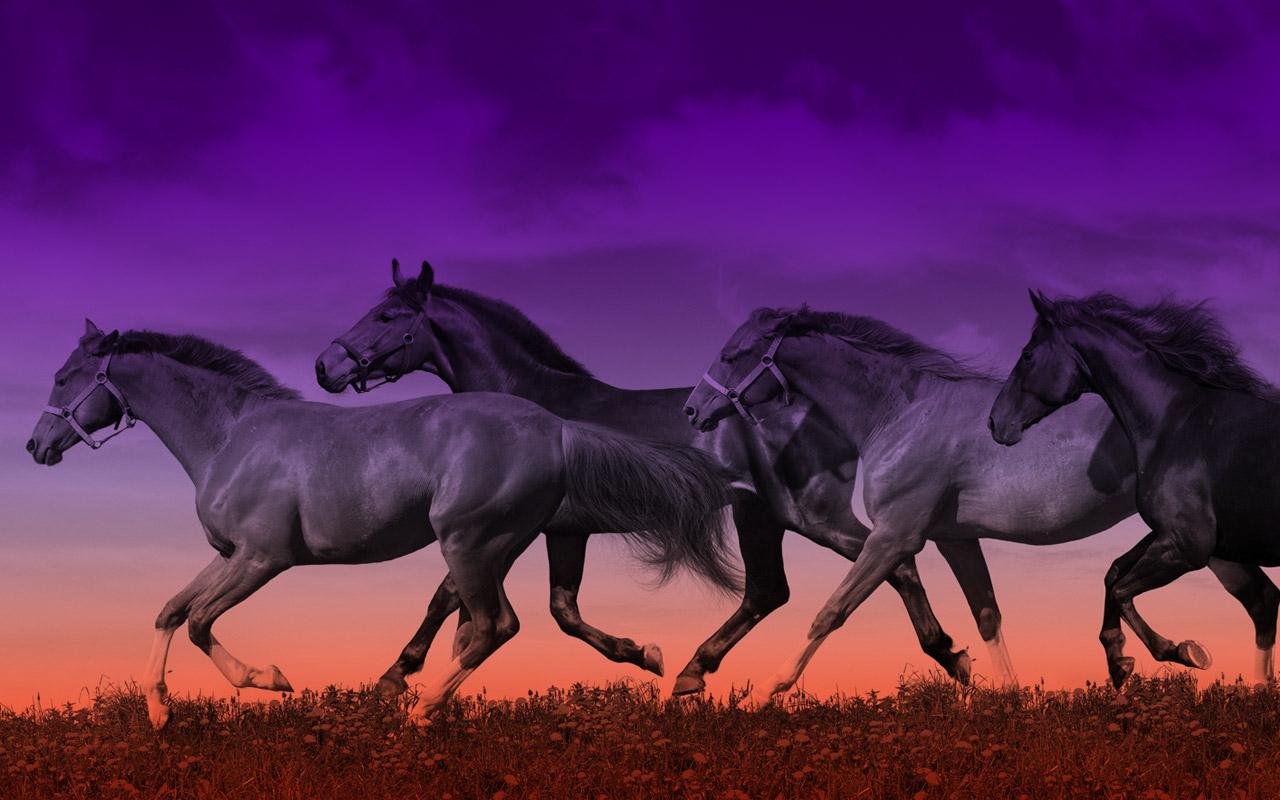 Ocala Horse