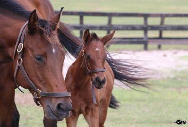 Pleasant Acres FARM – Breeding