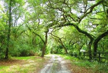 SPORTSMAN'S RETREAT, APPROX. 51 ACRES WITH 2100 +/- FEET ON OUTFALL CANAL IN HERNANDO, FL