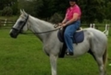 Thorouhbred Gelding-Beautiful