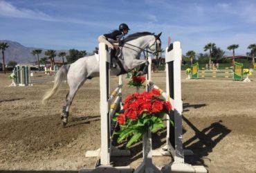 Superstar Jumper, Equitation, Dressage