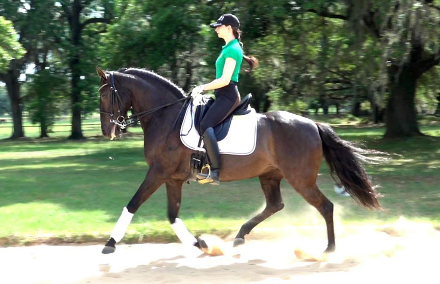 Imported from Europe – Lusitano Mare with Classical Training